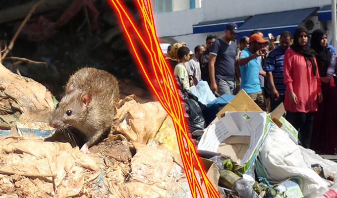 tunisie-directinfo-Entre-la-peste-a-Carthage-ou-le-cholera-a-Djerba-faut-il-choisir