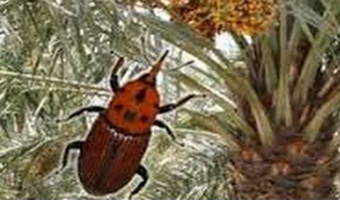 insecte-oasis-agriculture